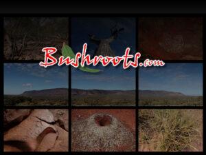 Bushroots